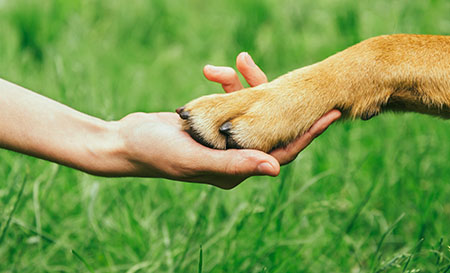dog shaking hands with person